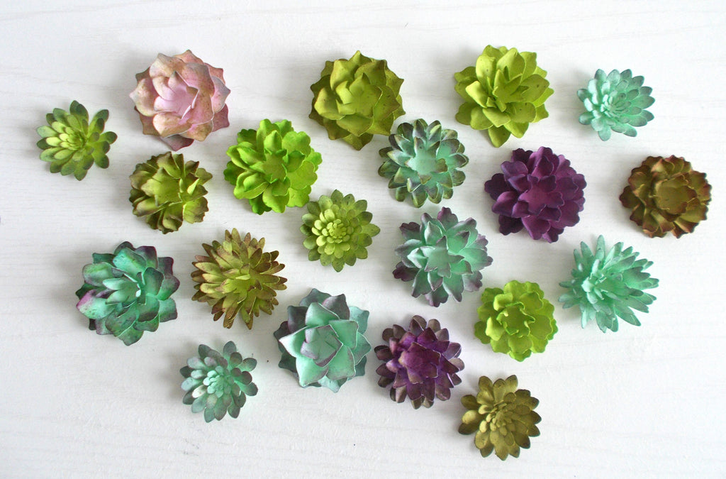 Seeded Paper Succulents
