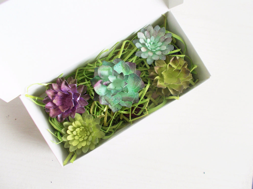 Succulent and Seed Bomb Gardening Assortment