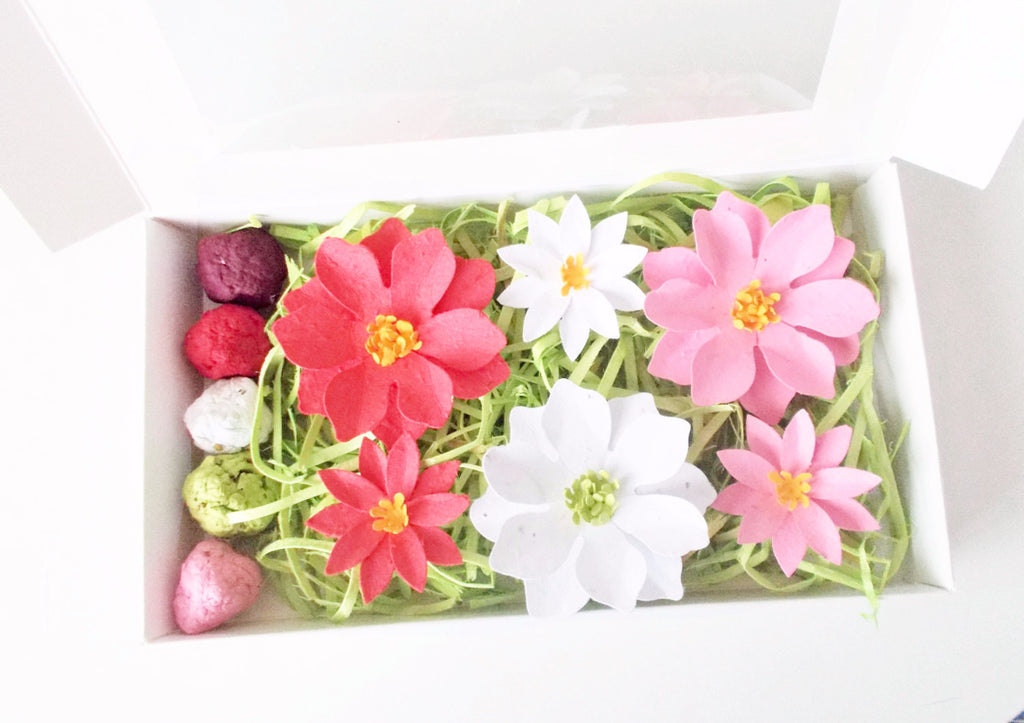 Plantable Paper Poinsettia Flowers and Seed Bombs Gift Set