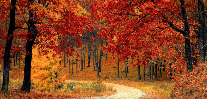 How to fall in love with fall | Doctor Aromas