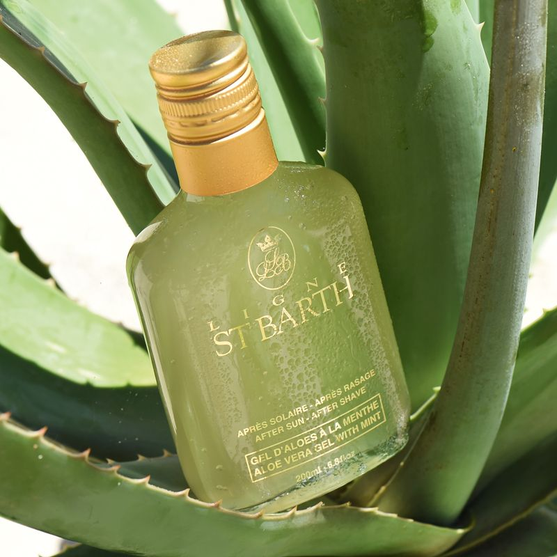 beauty shot of Ligne St. Barth Aloe Vera Gel with Mint 200 ml within an aloe plant