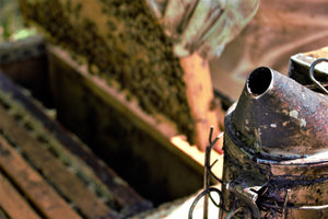 Honey and Beeswax Specialties at It's All About Bees! – It's