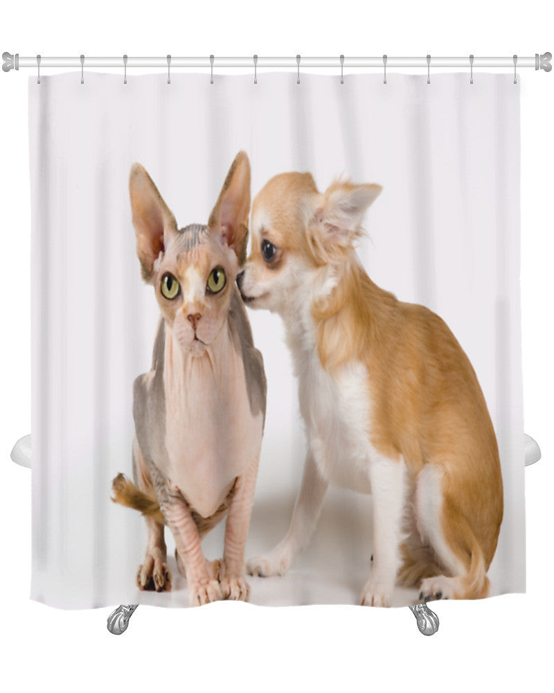 Shower Curtain Chihuahua And The Canadian Sphynx In Studio