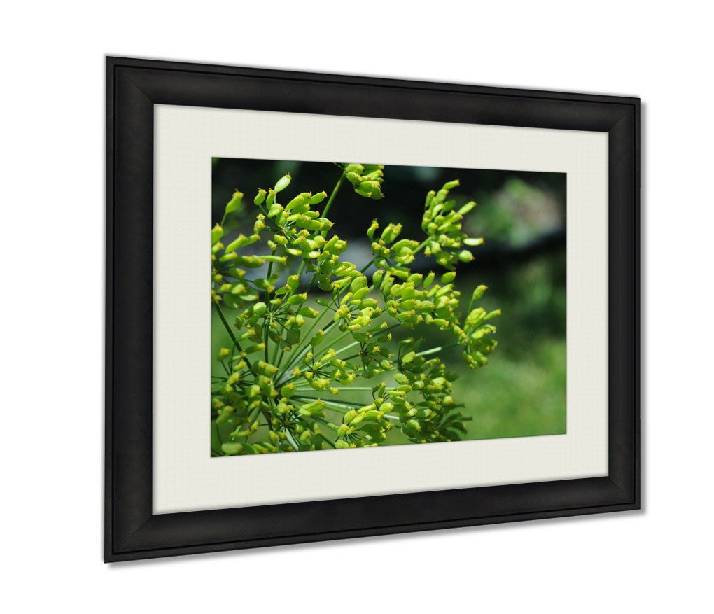 Framed Print, Green Poppy Seed