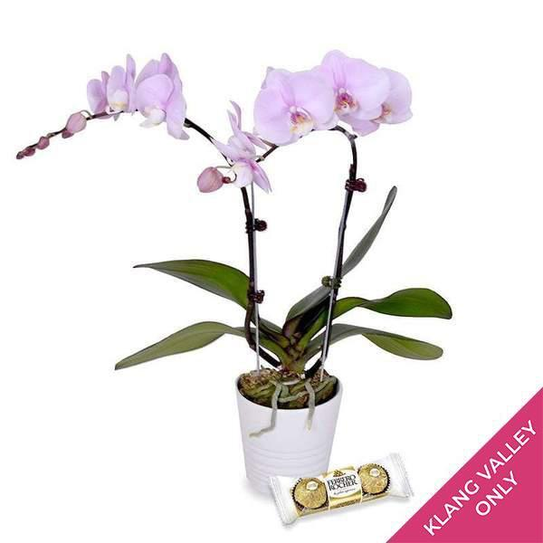 flowers_vase Lavender Delight Orchid (incl. FREE pot and FREE 3pcs Ferrero Rocher)