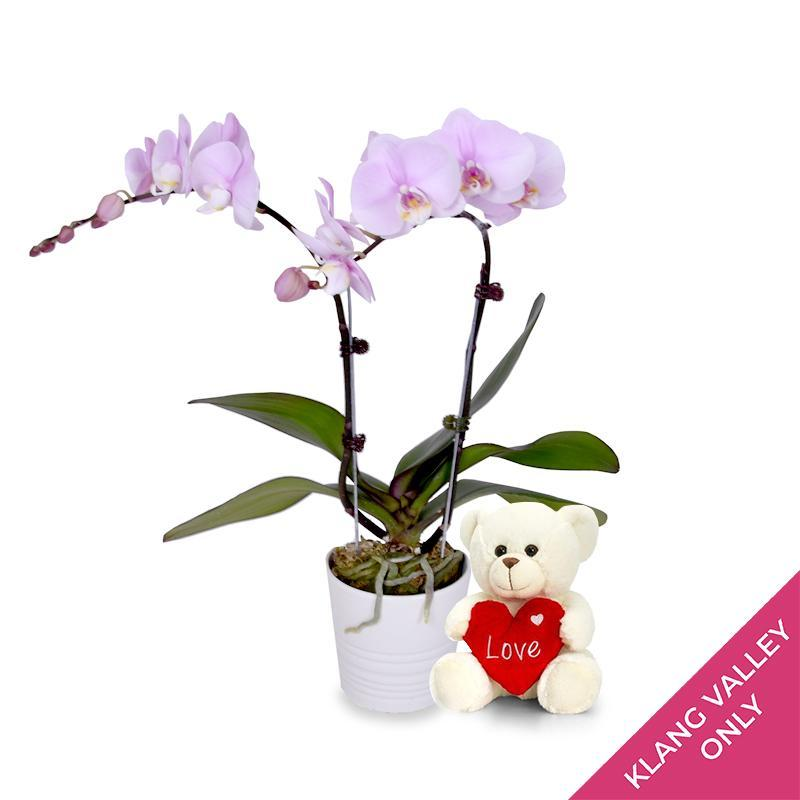 flowers_potted Lavender Delight Orchid (incl. FREE pot and FREE Teddy Bear)