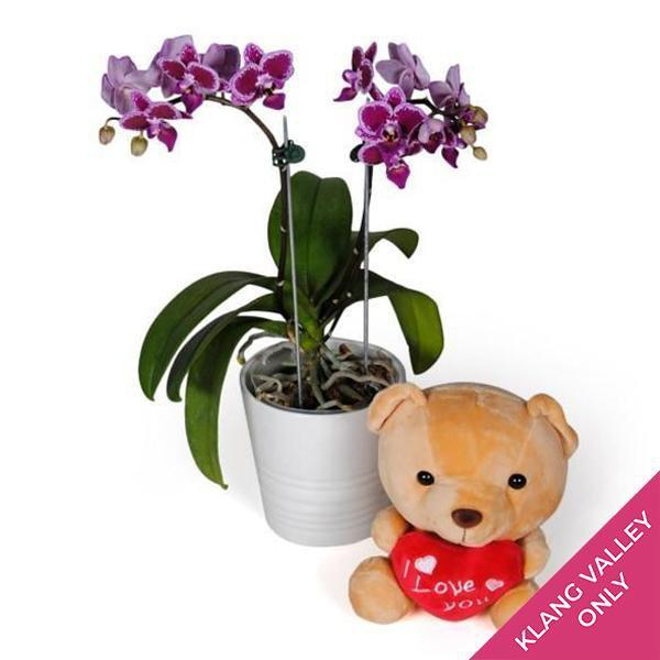 flowers_potted Purple Mini Orchid (incl. FREE Teddy Bear)