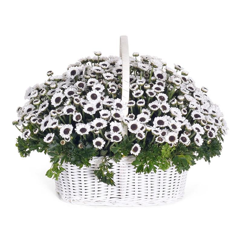 flowers_basket Winter White