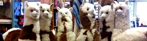Toy alpacas make a unique gift!