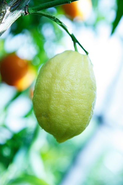 Eureka Lemon Yellow-Green Fruit