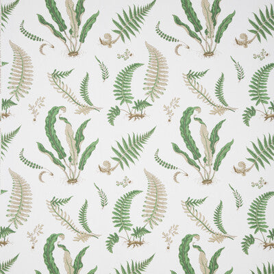 Ferns Print - Snow