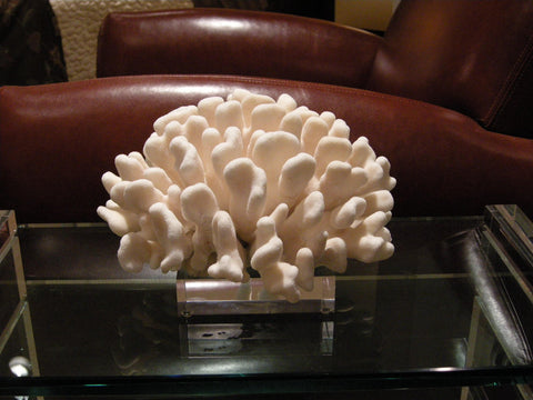 Finger Coral on Acrylic Base