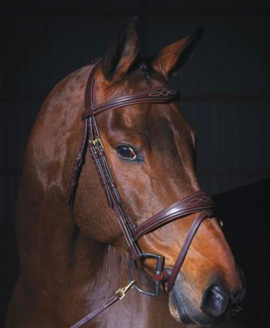 Bridles & Martingales & Reins