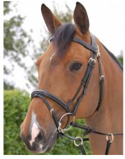 DYON WORKING BRIDLE B161
