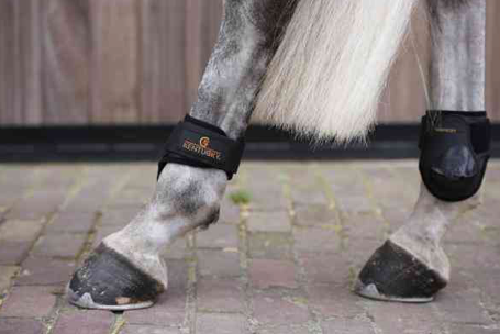 KENTUCKY YOUNG HORSE HIND VELRCO BOOTS