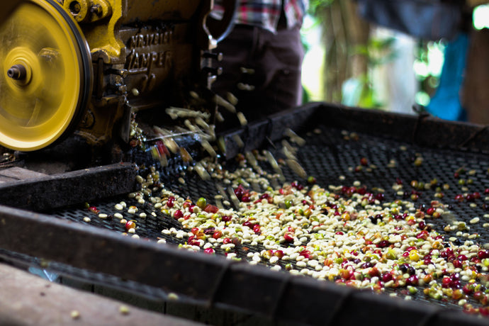 All about coffee - Initial Processing