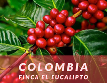 Load image into Gallery viewer, Colombia Narino Microlot - Finca El Eucalipto