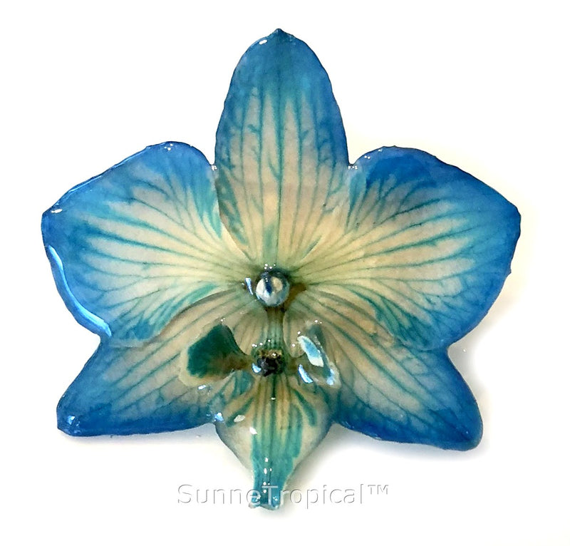 Phalaenopsis real orchid jewelry brooch (M) Blue