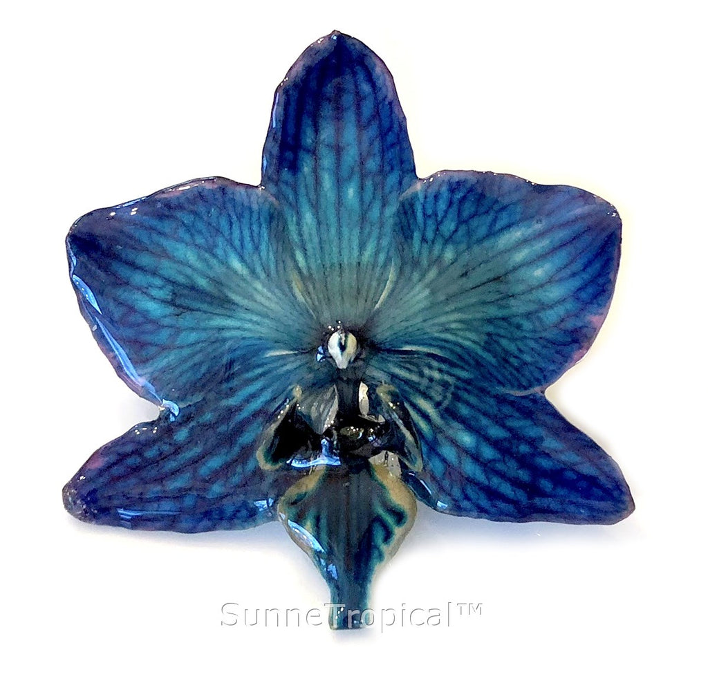 Phalaenopsis real orchid jewelry brooch (M) NAVY