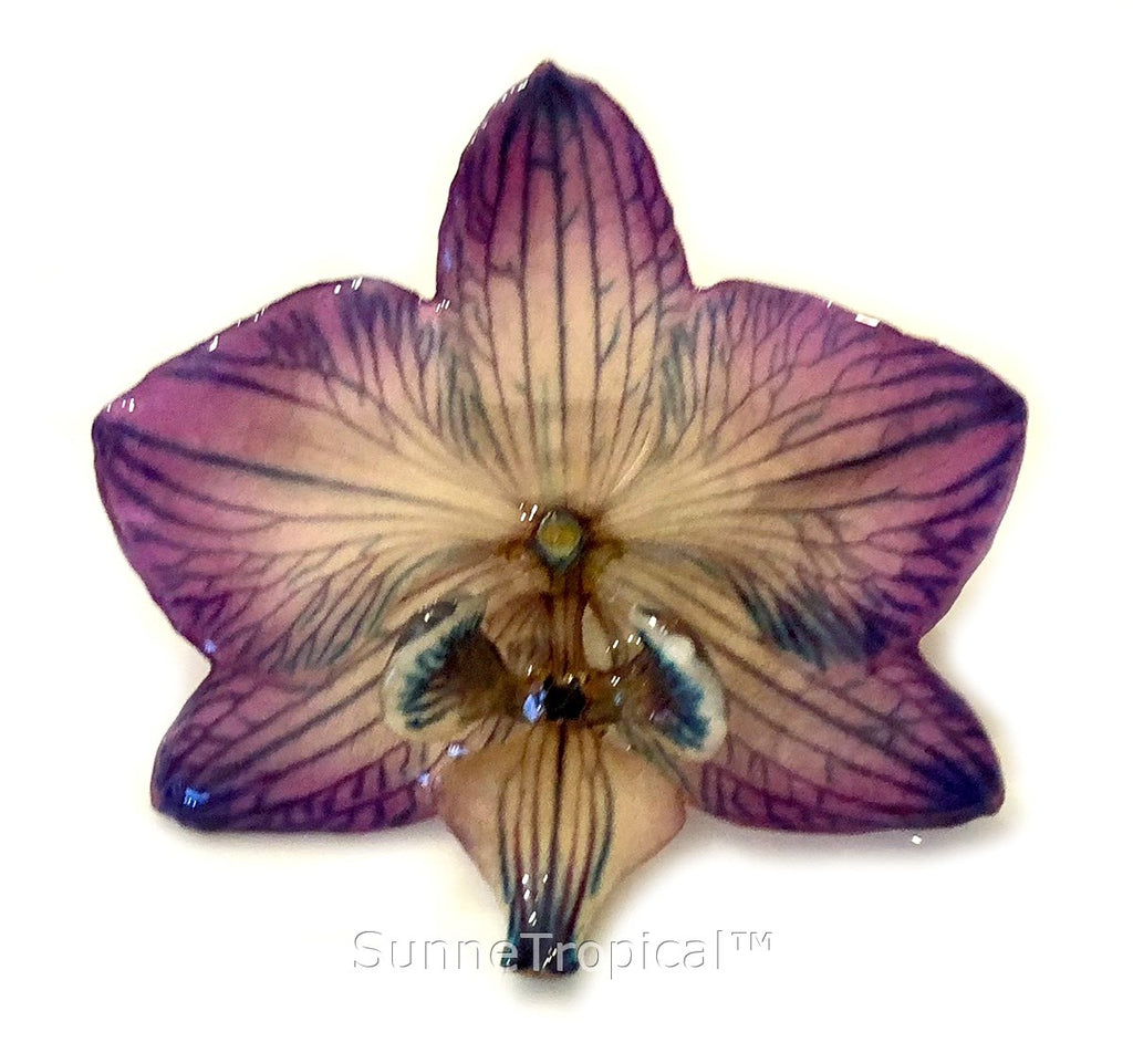 Phalaenopsis real orchid jewelry brooch (M) Purple