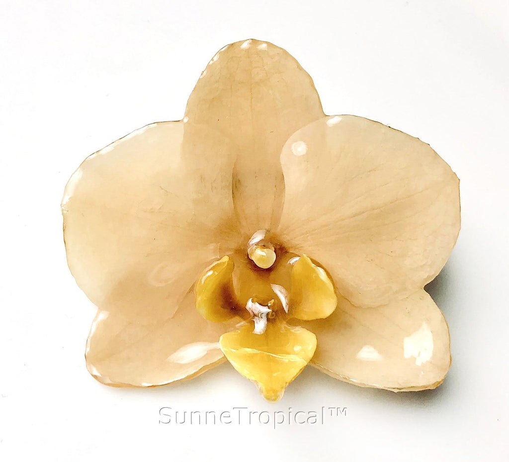Phalaenopsis real orchid jewelry brooch (M) white