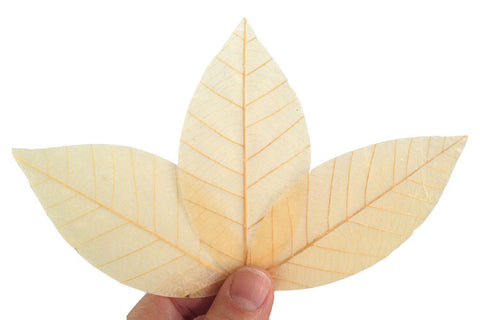 Real leaf soap unique gift soap ( Clear Honey 20 leafs )