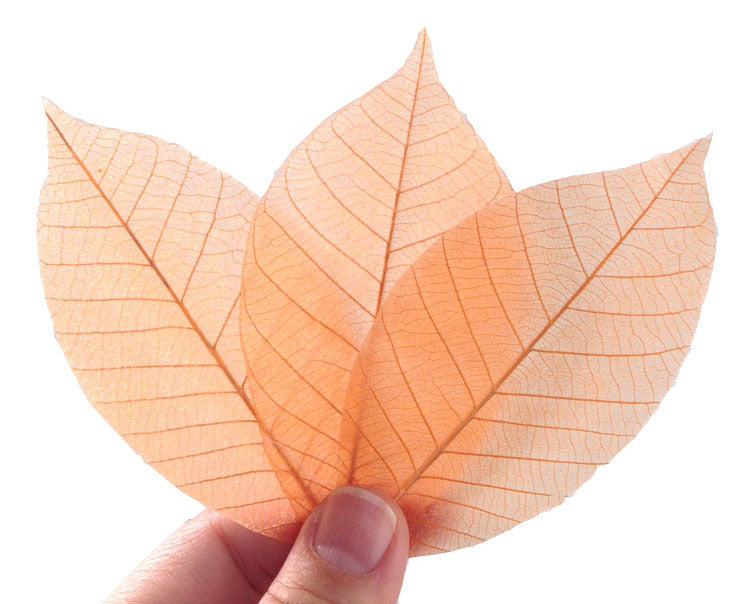 Biodegradable Eco Friendly Natural Real leaf soap unique gift soap ( Orange Payaya 20 leafs )
