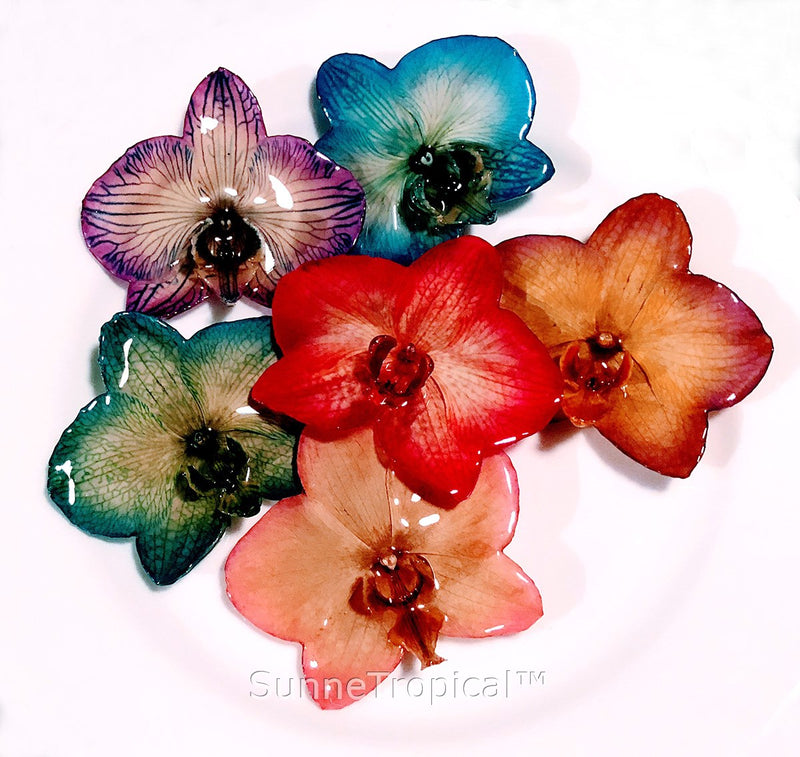 Phalaenopsis real orchid jewelry brooch (L) Blue