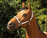 Rhinegold Sparkle Headcollar & Rope Set Silver