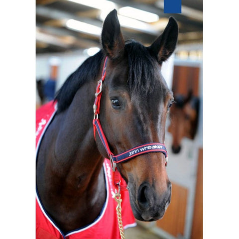 John Whitaker Fleece Lined Headcollar