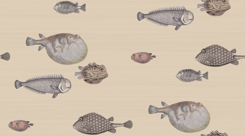 neutral fish wallpaper