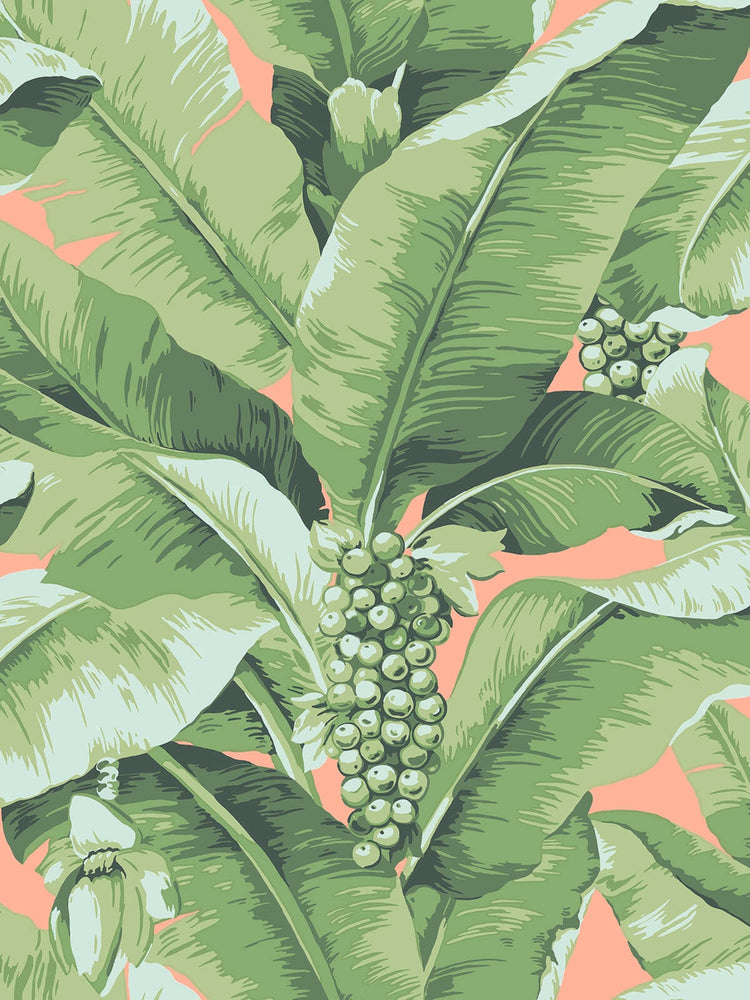 pink and green palm leaf wallpaper