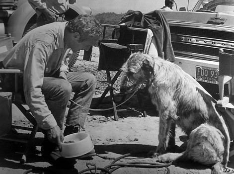 ‍‍Paul Newman and his Irish Wolfhound on the set in Sometimes a Great Notion (1971)