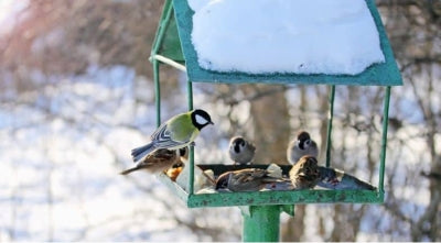 Bird feeders for winter birds