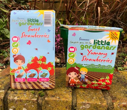 Strawberry Growing Kits for Kids