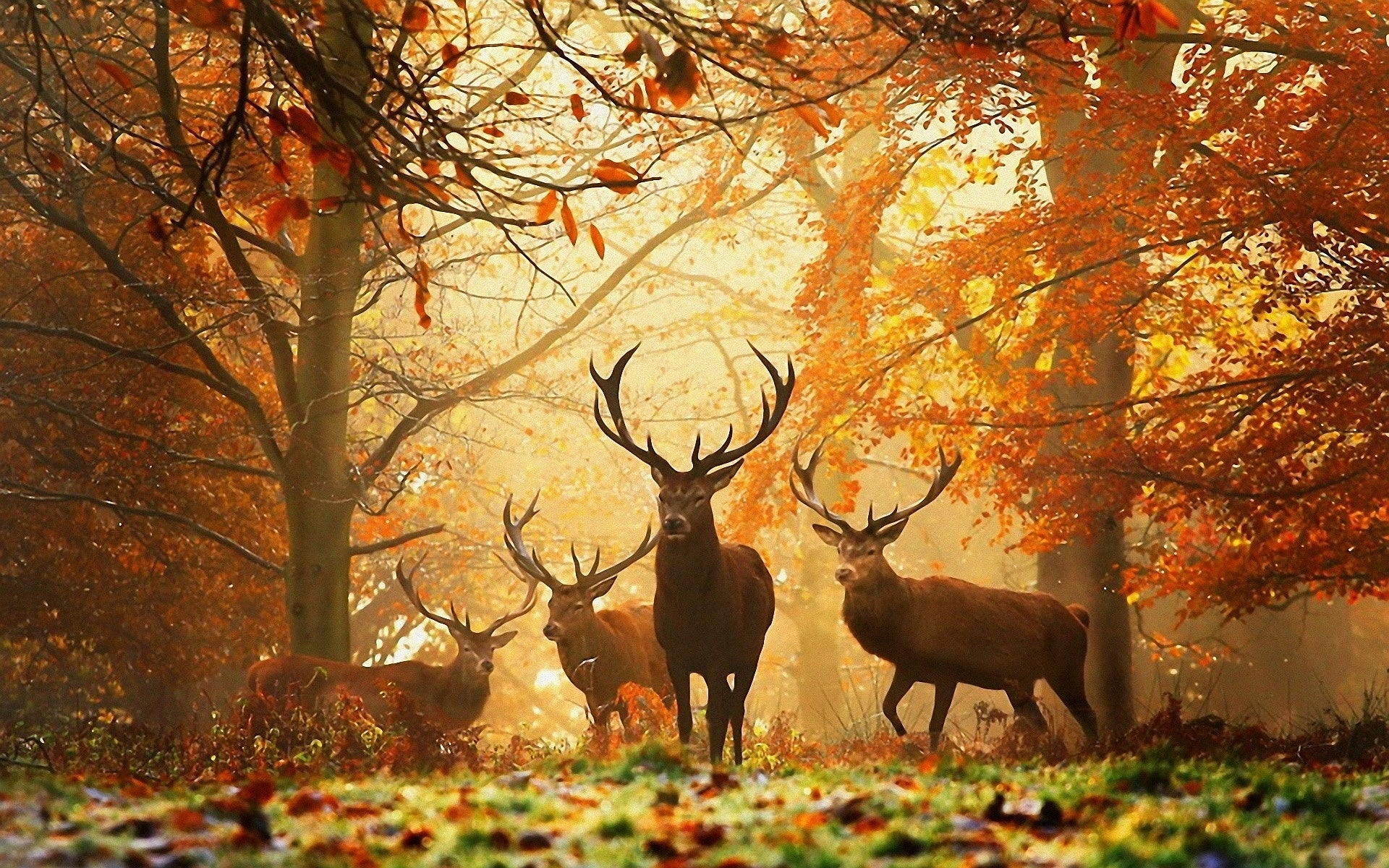 autumn stags