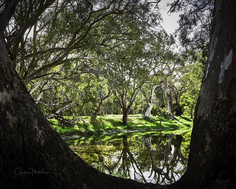 "Canvas Print Grampians Billabong Through Trees 12"" x 16"""