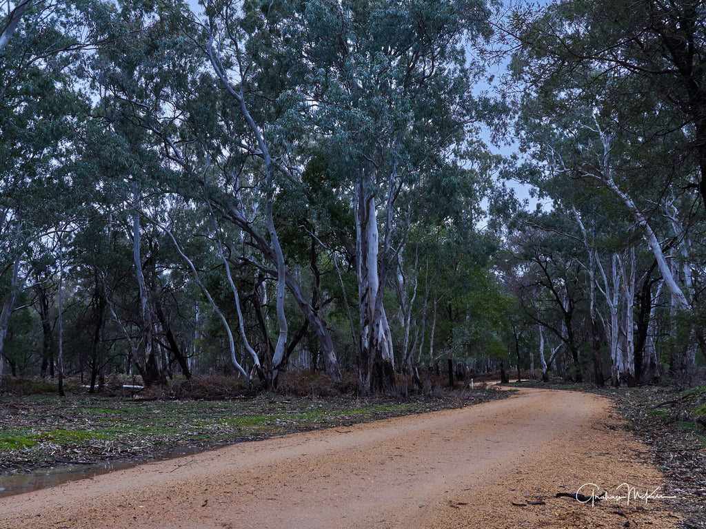 Digital Download Grampians Bush Road Low Res