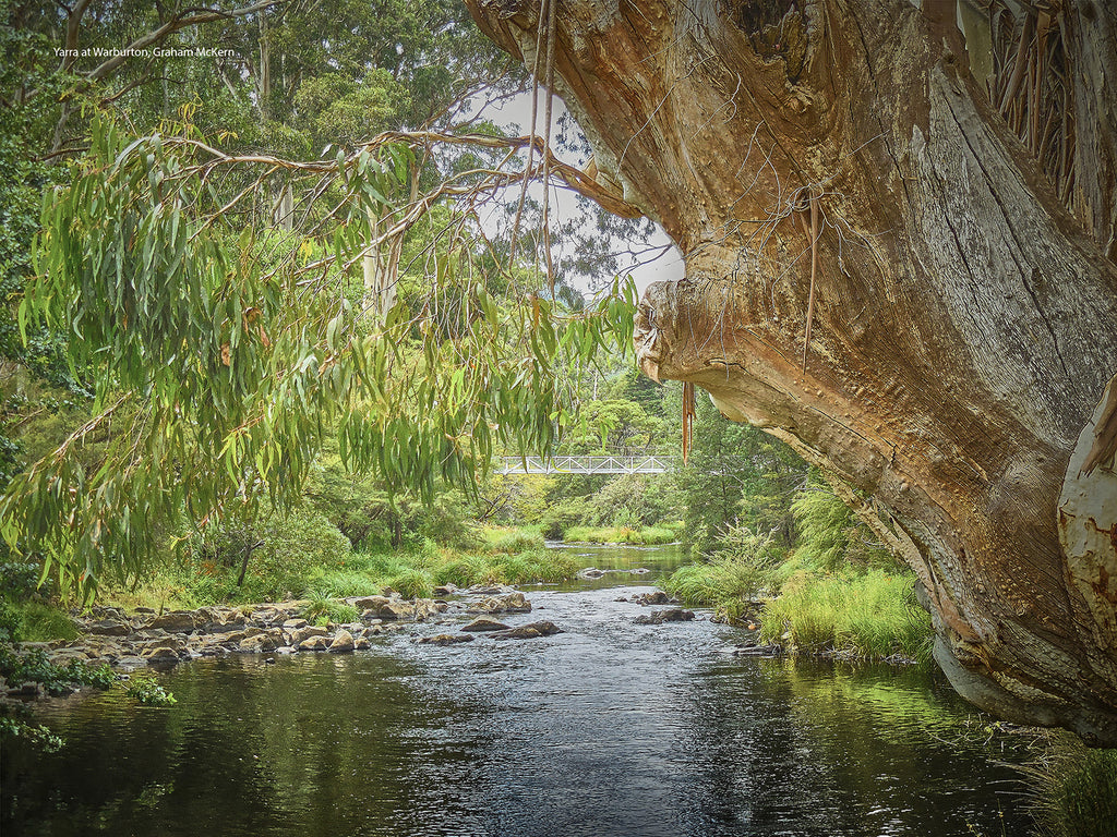 Digital Download Yarra at Warburton