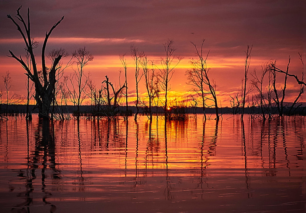 Greeting Card: Sunrise at Lake Fyans, Victoria