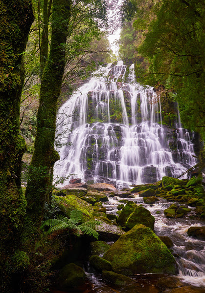 Greeting Card: Nelson Falls, Tasmania