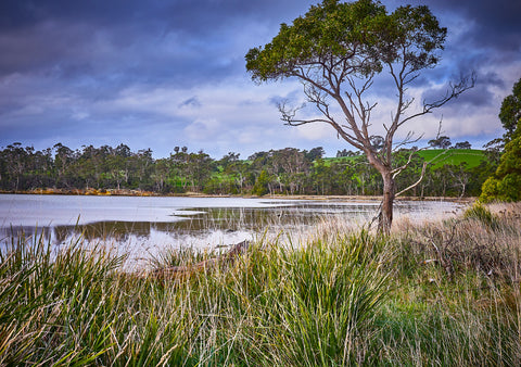 Greeting Card: Saltwater River, Tasmania