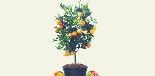 Balancing your Fruit Salad Tree