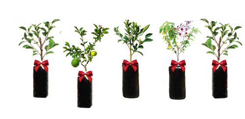Ultimate Gift Guide | Choose, deliver and gift a Fruit Tree