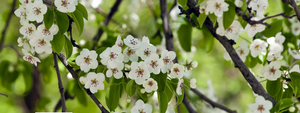 Fruit Salad Tree Care | Spring Tips