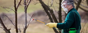 Winter Spraying: Stone Fruit Trees