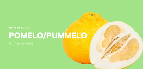 Fruit in Focus | Flicks Yellow Pomelo/Pummelo