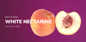 White Satin Nectarine Fruit Salad Trees