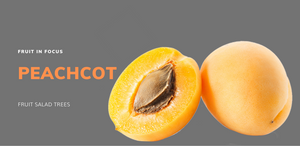 Peachcot a tropical fruit growing in all climates of Australia