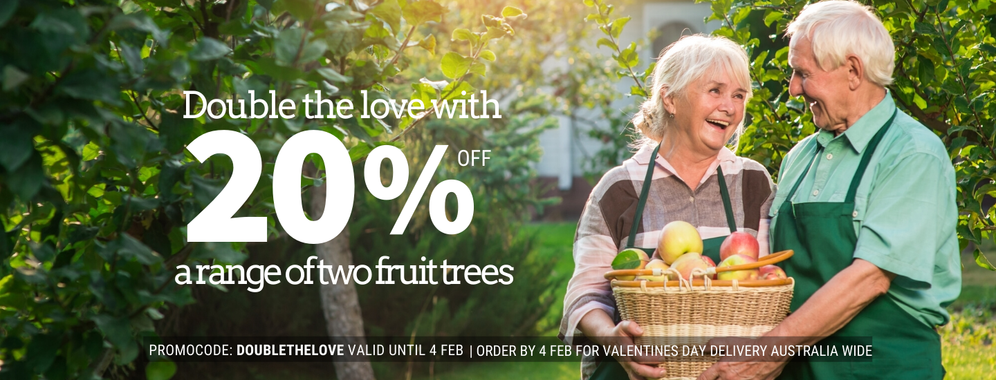 Double the love with 20% off a range of two fruit trees this Valentine's Day